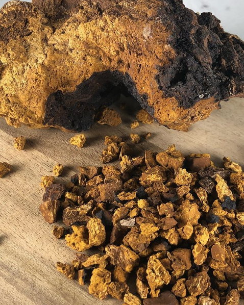 Chaga – King of Medicinal Mushrooms