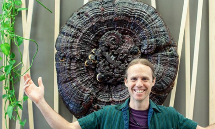 the Story behind our Mega-Reishi