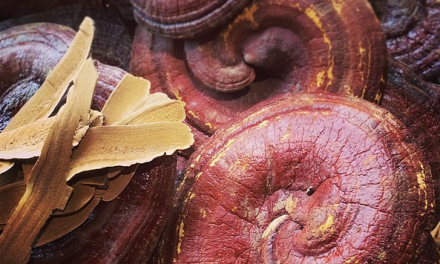 The Healing Powers of  Reishi Mushroom